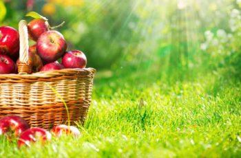 Quantas calorias tem uma maçã e principais tipos disponíveis no mercado