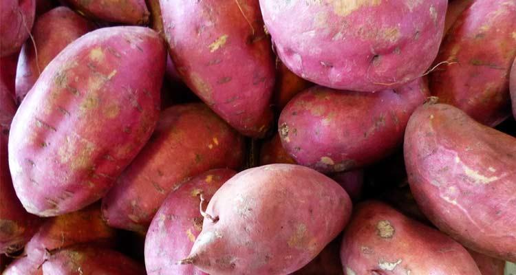 como escolher batata-doce - a melhor