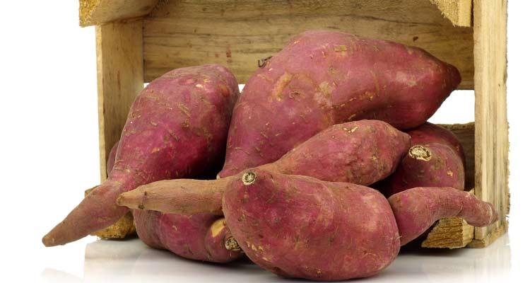 como escolher batata-doce - armazenagem