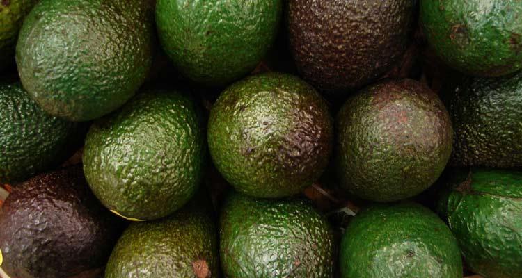 como escolher abacate - cores