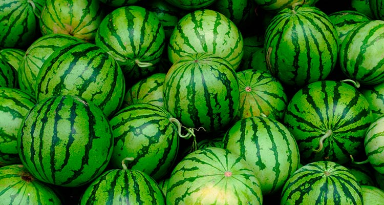 como escolher melancia madura - casca