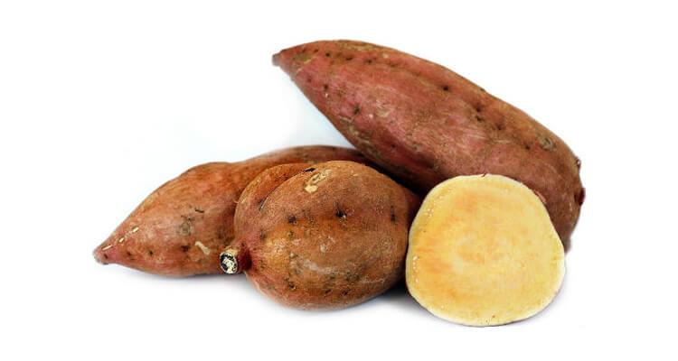 batata engorda