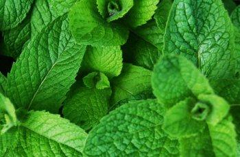 Descubra os incríveis benefícios da hortelã para a saúde